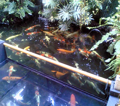 Jasa Dekorasi Pembuatan Kolam Ikan Rekomendasi Bandung