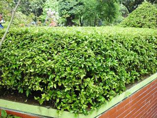 Jasa Taman Bandung Taman minimalis tanaman Perdu