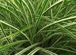 tanaman Hias bandung, jasa taman bandung